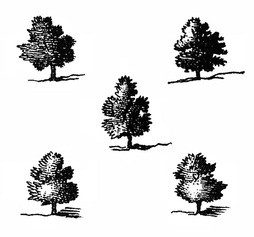 Logo_Quincunx_copia